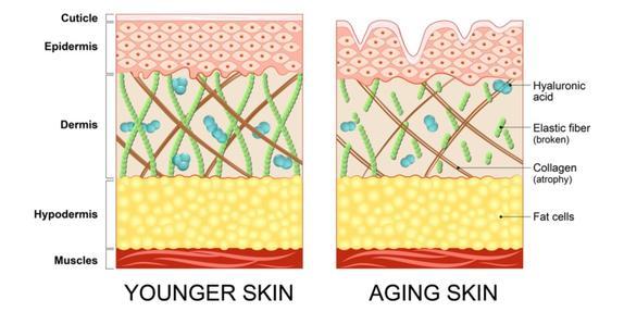 Face Chks Collagen